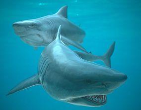 Shark 3D asset rigged