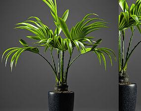 Plant Fan palm 2 3D model