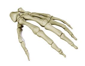 3D Hand Skeleton