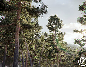 Pinus Syluestriformis Pack of 12 Pines 3Ds MAX