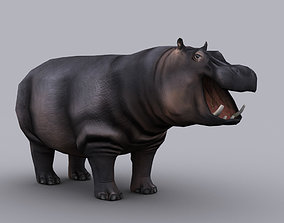 HIPPOPOTAMUS GAME READY ANIMATED MODEL animated