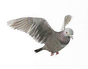 3D model Wings Spread Pigeon