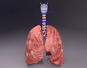respiratory tract lung trachea 3D model