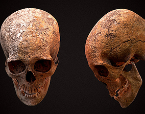 Real Human Skull 3D model