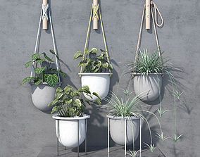 anthurium Plant set wrk-shp 3D model