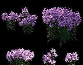 3D Phlox paniculata purple flame 02