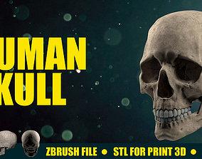 3D model spine Human Skull - Ready for Render