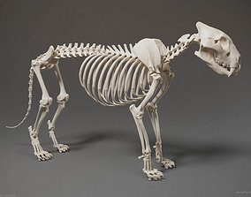 skeleton 3D Lion Skeleton Sculpture