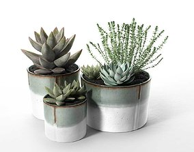 Succulent Pot Set with Echeveria and Rosemary 3D model