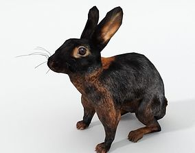 Tan Rabbit 3D model