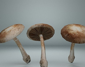 3D model Mushroom 01