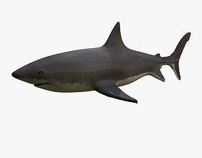 3D model teeth Great White Shark