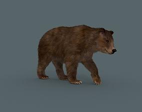 animated Best Bear - 3D animated Brown Bear