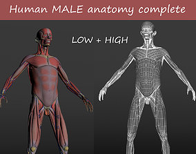 3D asset Human MALE anatomy