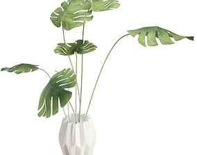 Philodendron Interior Plant And Vase 3D