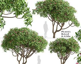 Set of Plumeria rubra or Red frangipani Trees - 3 Trees 3D