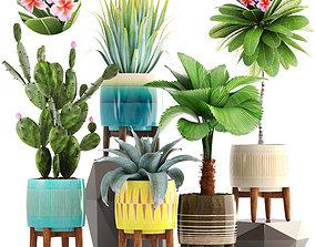 3D model Collection of plants plumeria