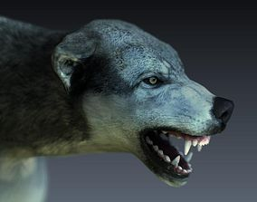 3D model rigged Gray Wolf