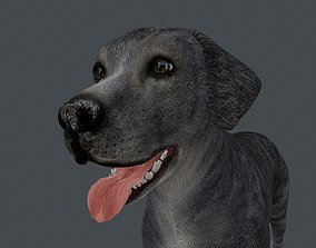 ANML-026 Dog Animated 3D model