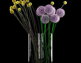 3D model Craspedia and Allium