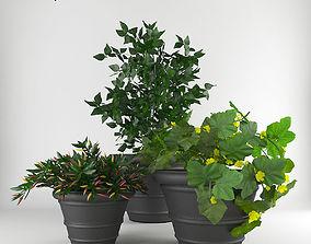 3D Kitchen garden Collection 5