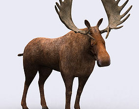 3DRT - Moose animated low-poly
