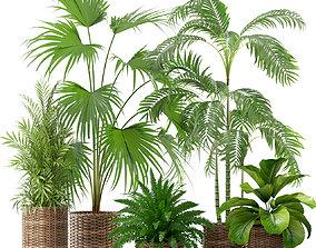 Plants collection 338 3D model