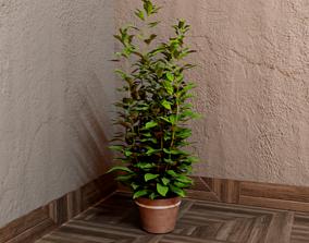 3D model House plant 002