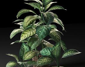 3D model Dieffenbachia in Pots