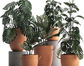 3D Collection Exotic plants Monstera 423