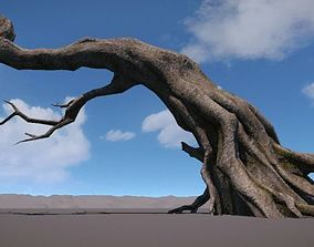 Ancient Tree V4 3D model