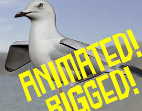 Realistic Seagull Model - Animated 3D asset