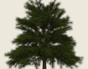 3D asset Game Ready Conifer Tree 10