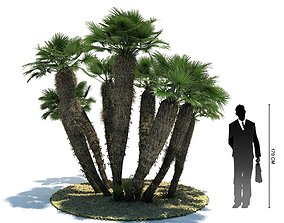 3D model Exotic Palm Tree Chamaerops Humilis