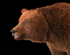 3D model Grizzly Brown Bear Rigged Hairs