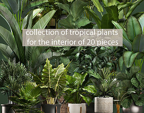 3D model Collection of potted plants for the interior of 2