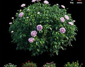 3D Rose plant set 50