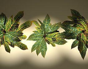 spotted croton bush 3D petra