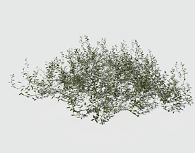 Prostrate Knotweed Pack 3D model