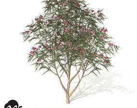 3D model XfrogPlants Rosemary Grevillea