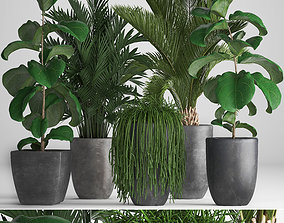 3D model tree Collection Exotic plants