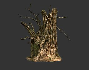 3D model Banyan Tree Trunk