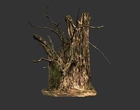 3D model Banyan Tree Trunk