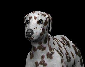 3D asset Brown Dalmatian Dog