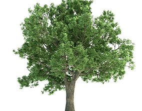 Lush Green Quercus Tree 3D model
