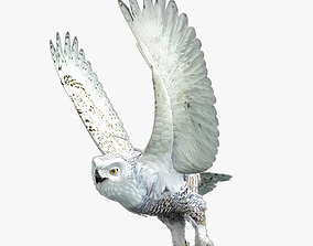 Snowy Owl - rigged - animated 3D