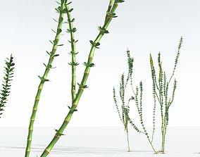 EVERYPlant Hollow-Stemmed Sphenophyllum 06 --16 3D