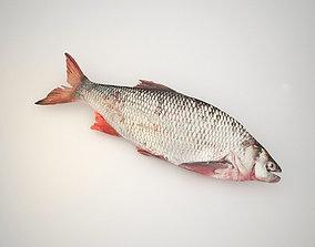 dish 3D model Raw fresh fish