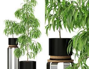 3D model Plants collection 242