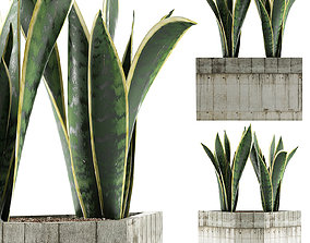 3D Plants Collection 86